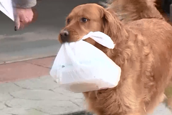 Dog delivers groceries to the neighbor at risk of COVID-19 in Colorado