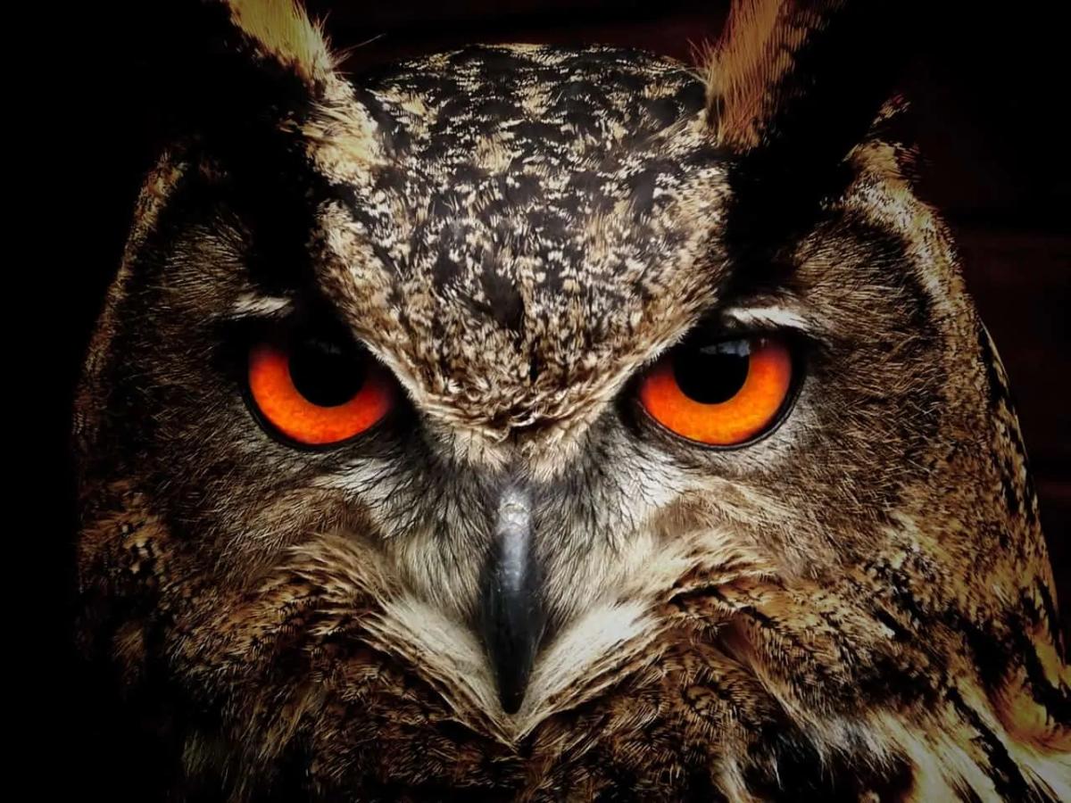 Owl on diet-wow